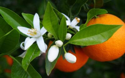 Putzmittel selber machen aus Orangenschalen
